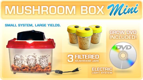 Spores Mushroom Spores Grow Kits mushroom spores syringes