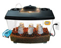 Click here for more information on HydroShroom Mushroom Growing System