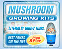 Click here for more information on MycoGarden 3-IN-1 Mushroom Growing System