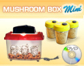 Click here for more information on Mushroom Box MINI Growing System